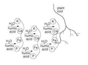 Root Nutrient Transfer Diagram